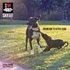 Sax - Řekni kde ty kytky jsou feat. Rest